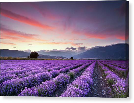 Sky Canvas Print - Lavender Season by Evgeni Dinev