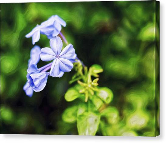 Canvas Print featuring the digital art Lavender Stars by Doctor Mehta