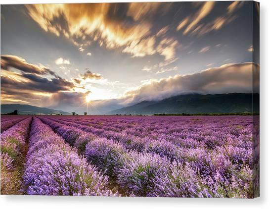 Lavender Sun Canvas Print