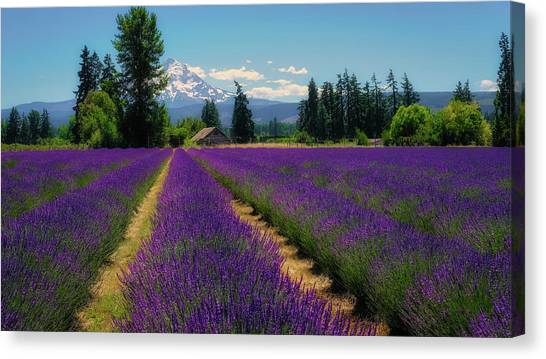 Canvas Print featuring the photograph Lavender Valley Farm by Robert Bellomy