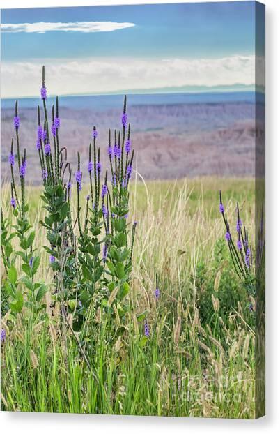 Lavender Verbena And Hills Canvas Print