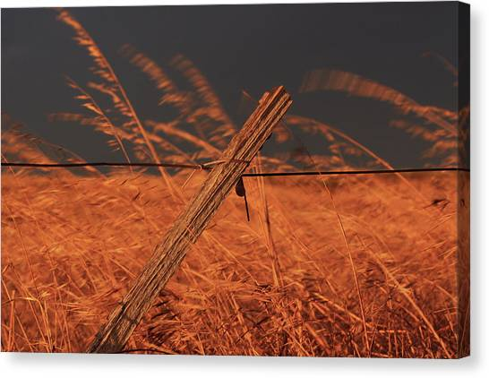 Lay Me Down In Golden Pastures Canvas Print
