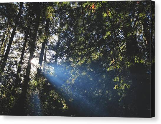 Redwood Forest Canvas Print - Lay Your Soul Bare by Laurie Search