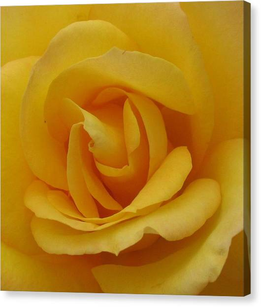 Layers Of Petals Canvas Print by Kathy Roncarati