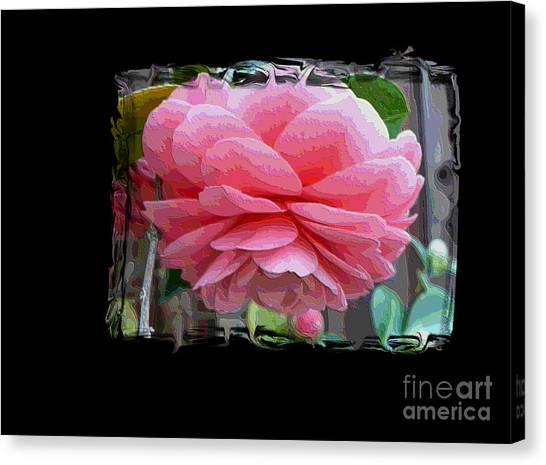 Camellia Canvas Print - Layers Of Pink Camellia Dream by Carol Groenen