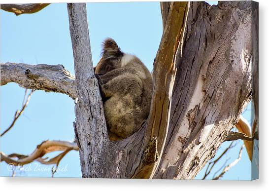 Great Otway National Park Canvas Print - Lazy Days And Afternoon Naps by Nick Zivanovich