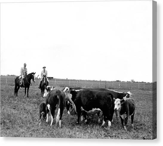 Lyndon Johnson Canvas Print - Lbj & Humphrey On Horseback by Underwood Archives