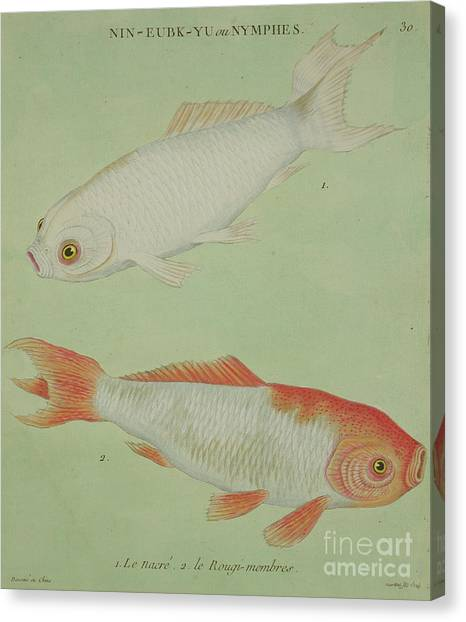 Goldfish Canvas Print - Le Nacre, Le Rougi Membres by Chinese School