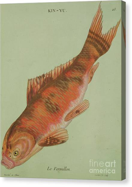 Angle Fish Canvas Print - Le Vermillon by Chinese School