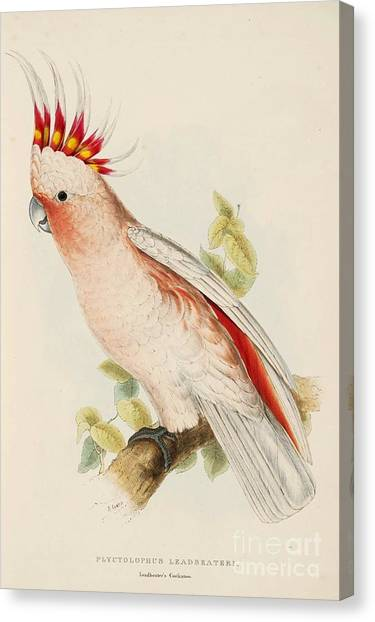 Cockatoos Canvas Print - Leadbeaters Cockatoo by Pg Reproductions