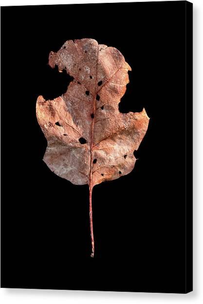 Leaf 24 Canvas Print