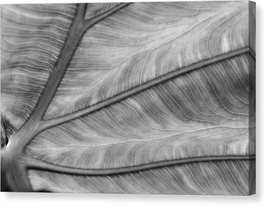 Leaf Abstraction Canvas Print