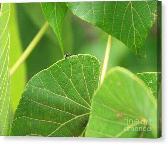 Ants Canvas Print - Leaf And Ant by Kathleen Wong