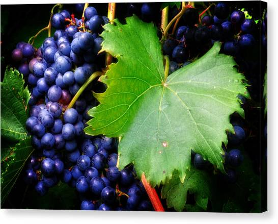 Leaf And Grapes Canvas Print