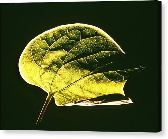 Leaf Detail Canvas Print by Gerard Fritz