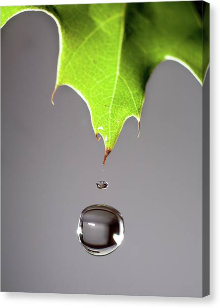 Leaf Drip Canvas Print