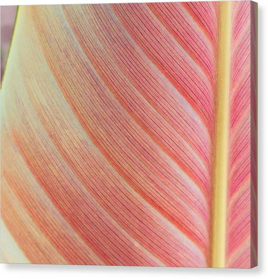 Leaf In Pink  Canvas Print