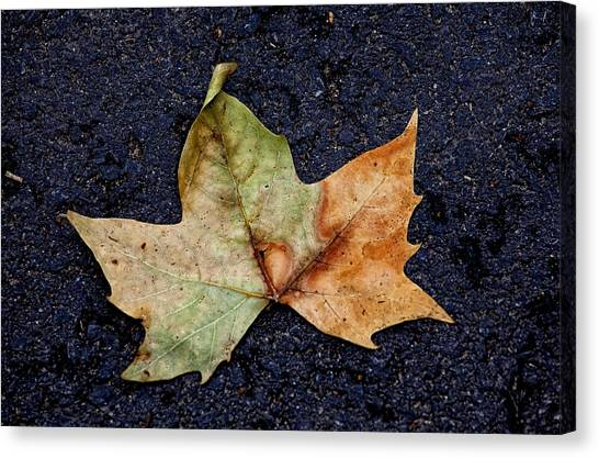 Leaf In The Road Canvas Print by Robert Ullmann