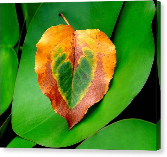 Leaf Leaf Heart Canvas Print