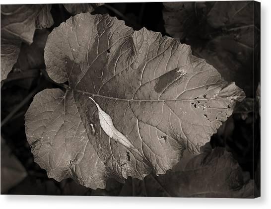 Leaf On A Leaf Canvas Print