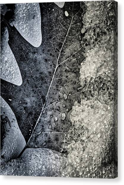 Leaf On Ice Canvas Print