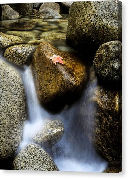 Leaf On Rock-yosemite Valley Canvas Print
