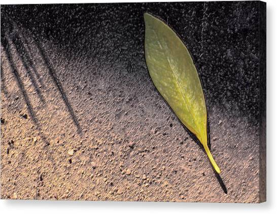 Leaf On Street Canvas Print