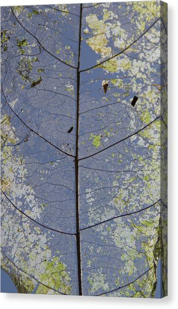 Canvas Print featuring the photograph Leaf Structure by Debbie Cundy