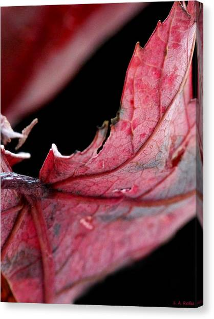 Leaf Study I Canvas Print