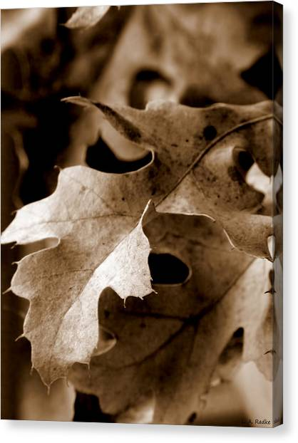 Leaf Study In Sepia IIi Canvas Print