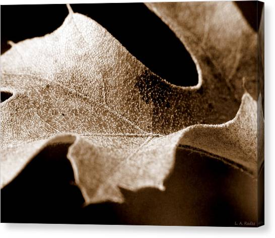 Leaf Study In Sepia Canvas Print