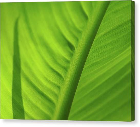 Leaf Study Canvas Print