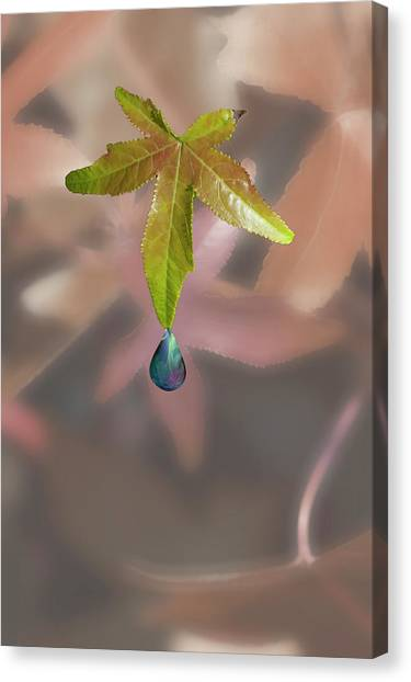 Leaf With Droplet Canvas Print by Peter Hill