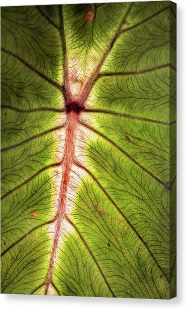 Leaf With Veins Canvas Print