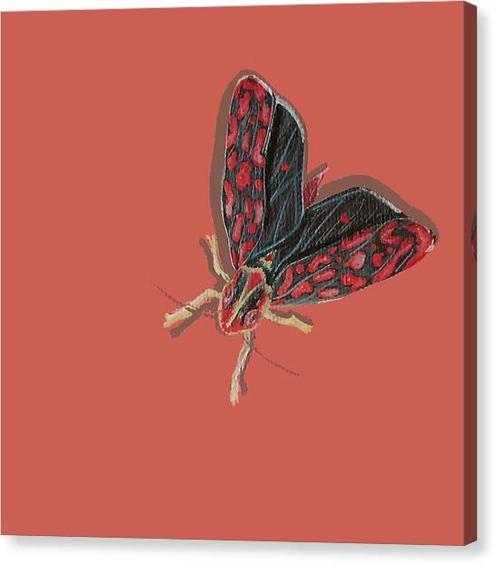 Leafhopper Canvas Print
