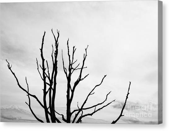 Leafless Tree Canvas Print