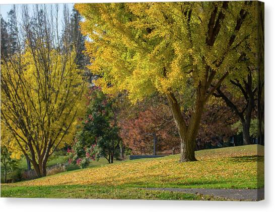 Uc Davis Canvas Print - leafs changing to vibrant yellow in UC Davis arboretum  by Mike Fusaro