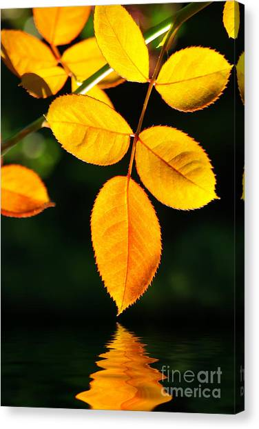 Autumn Leaves Canvas Print - Leafs Over Water by Carlos Caetano