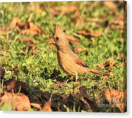 Leafy Cardinal Canvas Print