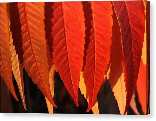 Leafy Valance Canvas Print