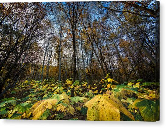 Leafy Yellow Forest Carpet Canvas Print