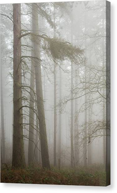 Early Spring Canvas Print - Leaning by Chris Dale