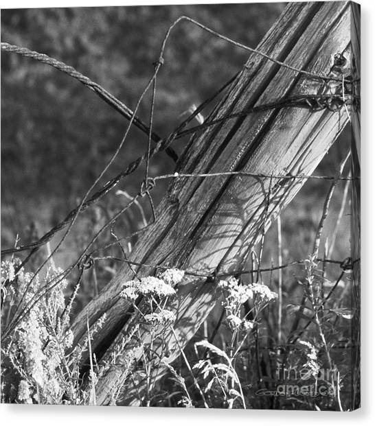 Leaning Farm Fence Post Amongst Weeds In Evening Sun Canvas Print by Gordon Wood