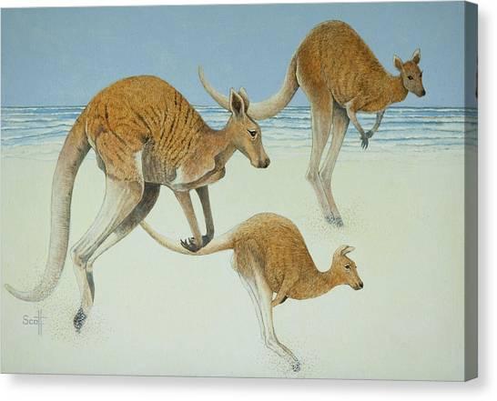 Kangaroo Canvas Print - Leaping Ahead by Pat Scott