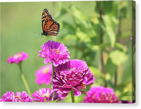 Leaping Butterfly Canvas Print