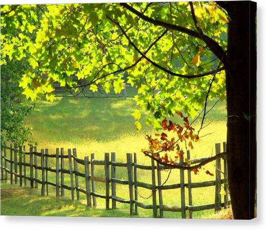 Leaves And Fence Canvas Print
