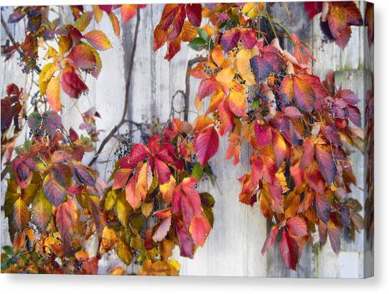 Leaves And Vines Canvas Print by Donald Schwartz
