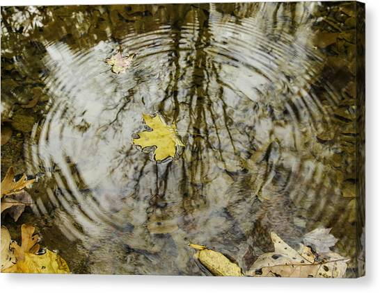 Autumn Leaves Canvas Print - Leaves And Water by Andrew McElvery