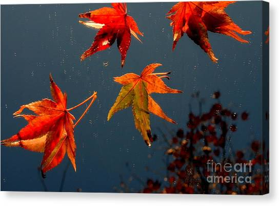 Leaves Falling Down Canvas Print