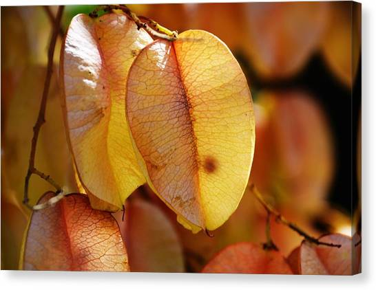 Leaves Hang For Fall-gerorgia Canvas Print